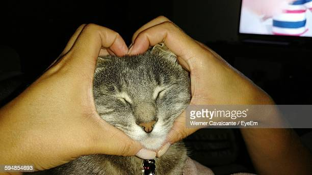 Cropped Hand Making Heart Shape While Holding Kitten At Home