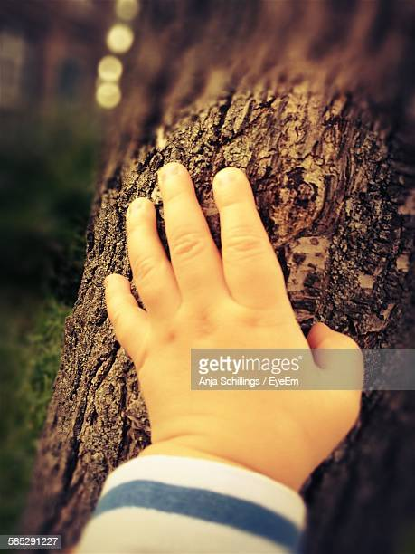 Cropped Hand Of Baby Touching Tree Trunk