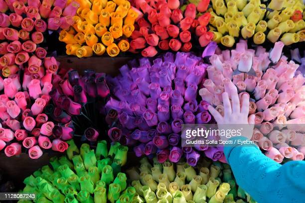 cropped hand of girl touching colorful flowers in market - sofia rose stock photos and pictures