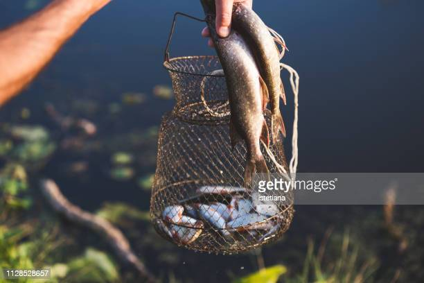 cropped hand of happy fisherman with fishing trophy - pike fish stock pictures, royalty-free photos & images