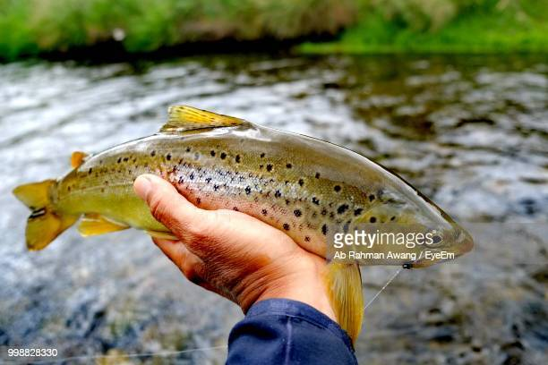 cropped hand of man holding fish against lake - catch of fish stock pictures, royalty-free photos & images