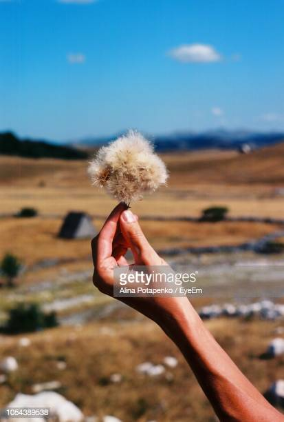 Cropped Hand Of Man Holding Flower Against Landscape