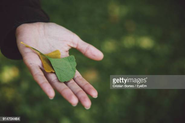 cropped hand of man holding leaves - bortes cristian stock photos and pictures
