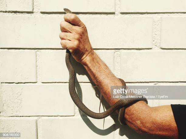 Cropped Hand Of Man Holding Snake Against Wall