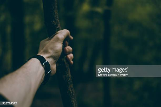 Cropped Hand Of Man Holding Stick In Forest