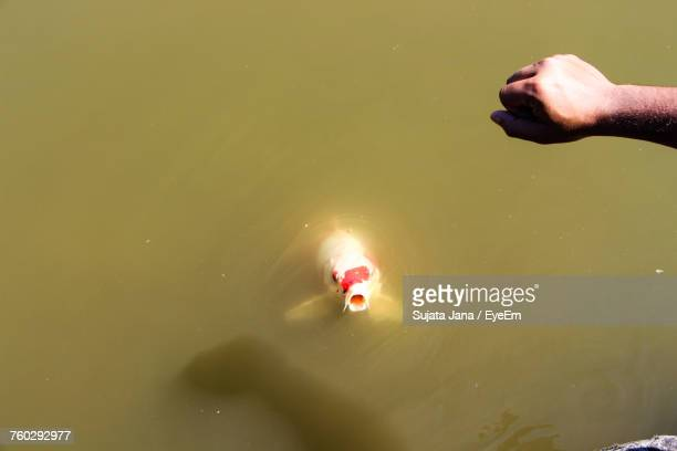 Cropped Hand Of Man Over Fish Swimming In Lake