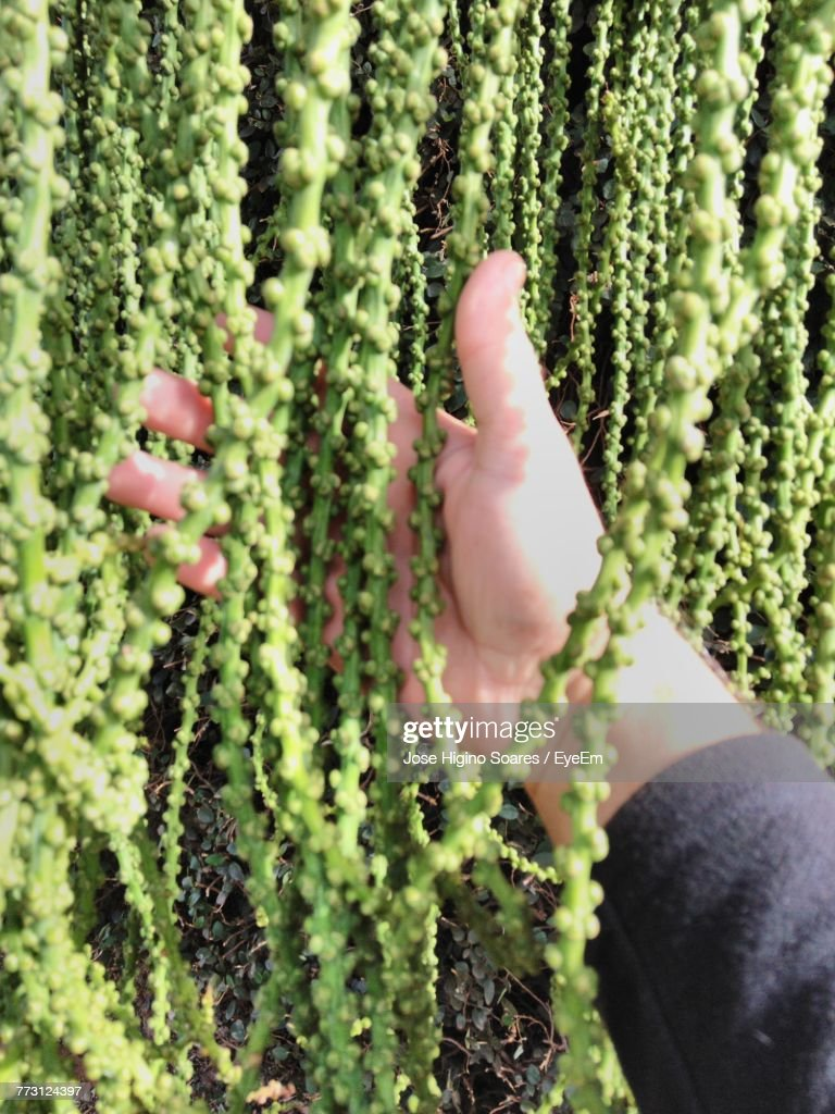 Cropped Hand Of Man Touching Plants : Photo