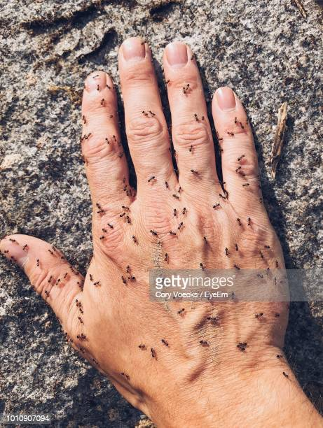 Cropped Hand Of Man With Ants On Rock