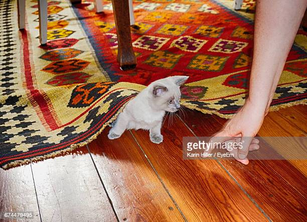 Cropped Hand Of Man With Kitten On Hardwood Floor At Home