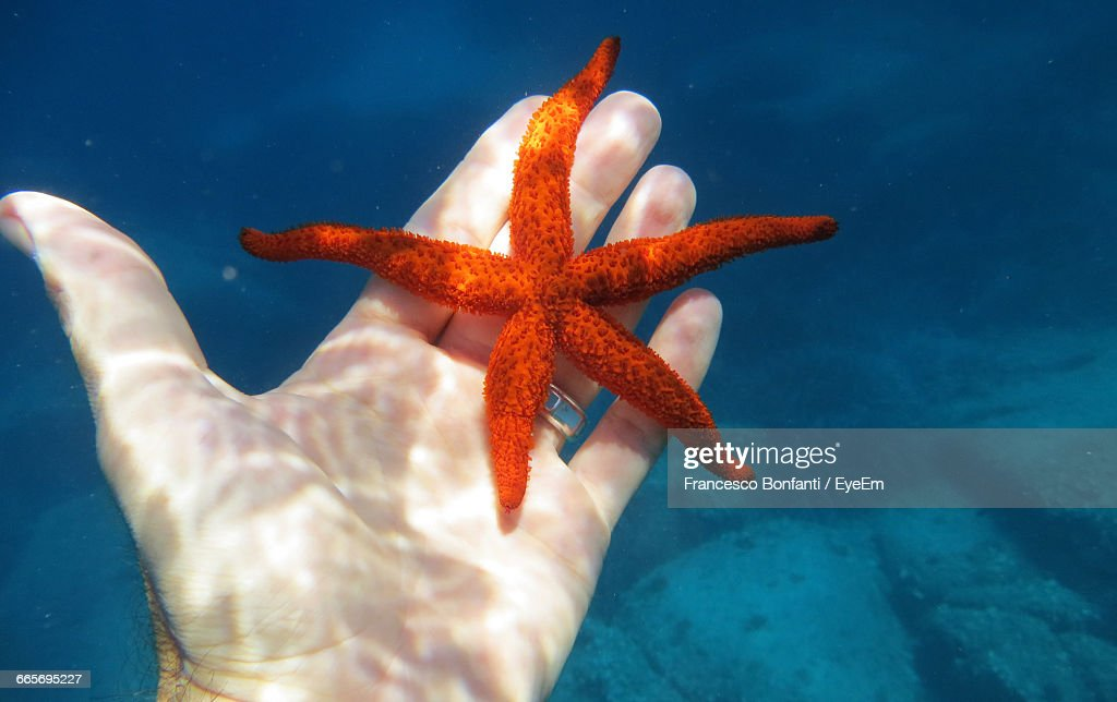Cropped Hand Of Man With Starfish In Sea : Stock Photo