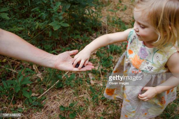 Cropped hand of mother giving berries to daughter standing in forest