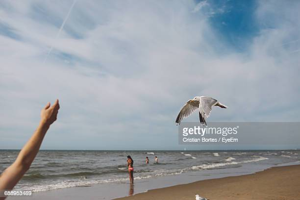 cropped hand of person by seagull at beach against sky - bortes stockfoto's en -beelden