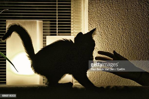 Cropped Hand Of Person By Silhouette Cat Against Window