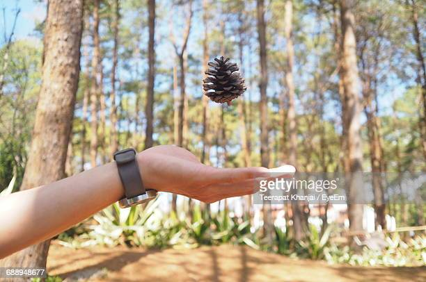 Cropped Hand Of Person Catching Pine Cone