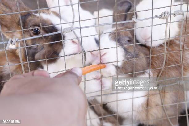 Cropped Hand Of Person Feeding Rabbit In Cage