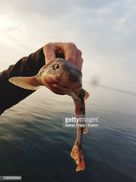cropped hand of person holding dead fish against sea during sunset - dogfish stock pictures, royalty-free photos & images