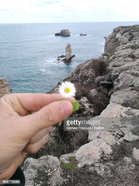 cropped hand of person holding flower at beach - frescura stock pictures, royalty-free photos & images