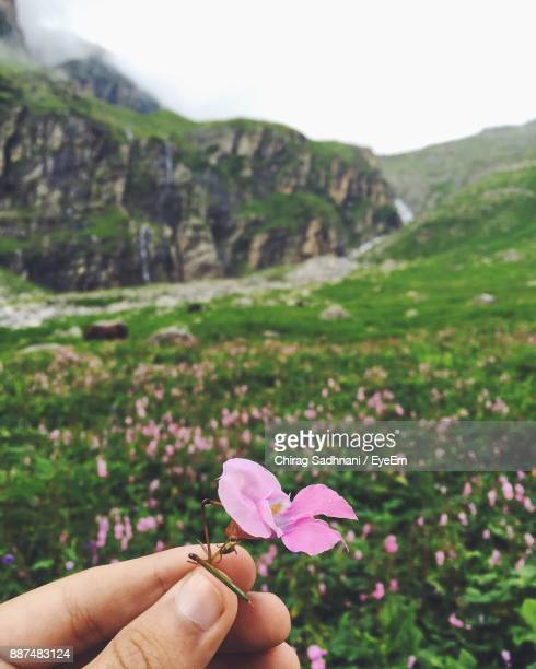 Cropped Hand Of Person Holding Pink Flower On Field