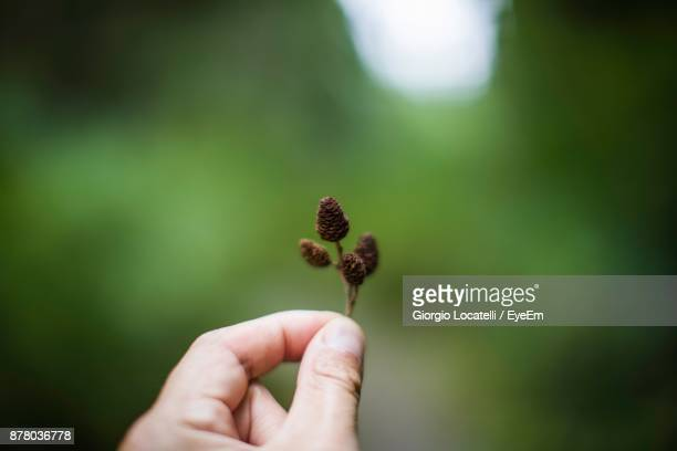 Cropped Hand Of Person Holding Plant