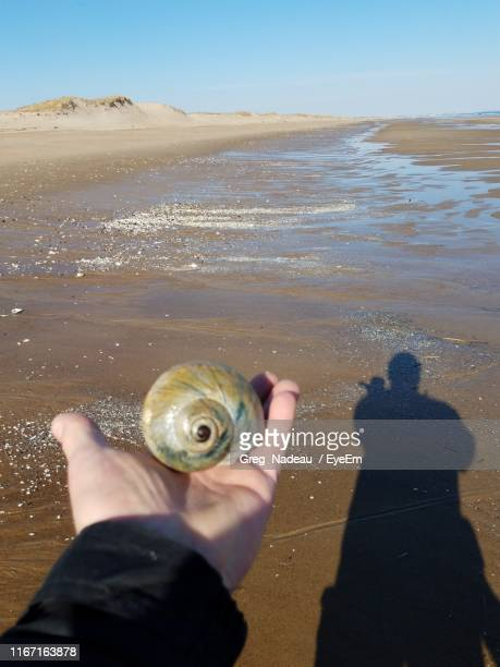 Cropped Hand Of Person Holding Shell At Beach