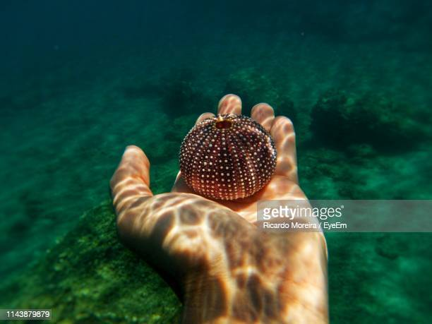 cropped hand of person holding urchin in sea - spetses stock pictures, royalty-free photos & images