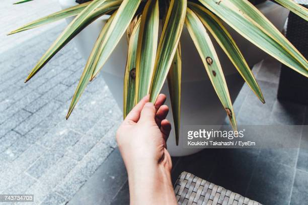 Cropped Hand Of Person Touching Leaf