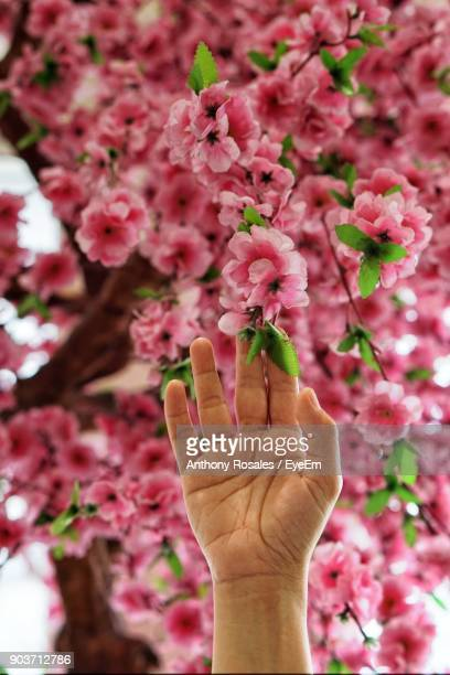 Cropped Hand Of Person Touching Pink Flower