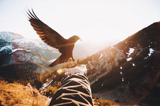 Cropped Hand Of Woman Holding Bird Against Mountains - gettyimageskorea