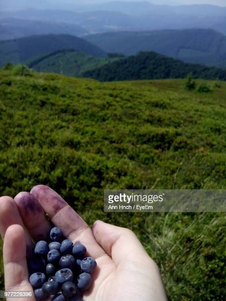 Cropped Hand Of Woman Holding Blueberry Over Field Against Sky