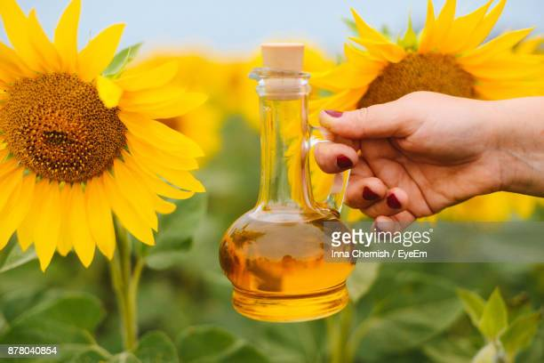 Cropped Hand Of Woman Holding Cooking Oil In Jar At Sunflower Farm