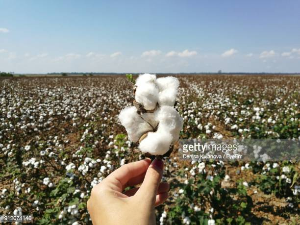 Cropped Hand Of Woman Holding Cotton Against Sky