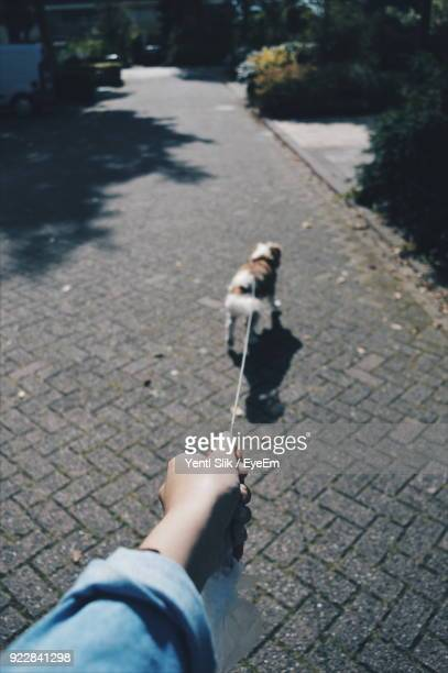 Cropped Hand Of Woman Holding Dog Leash On Footpath