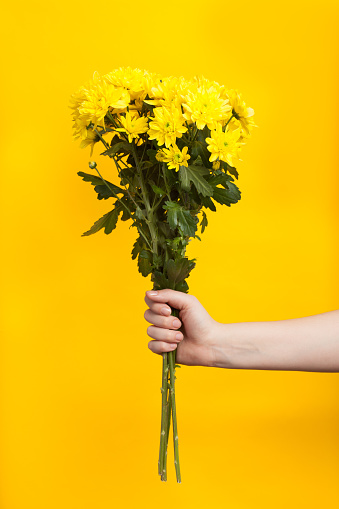 Cropped Hand Of Woman Holding Flowers Against Yellow Background - gettyimageskorea