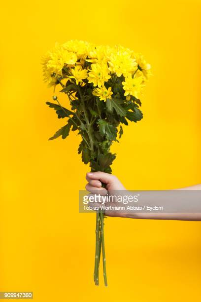 cropped hand of woman holding flowers against yellow background - bouquet stock pictures, royalty-free photos & images