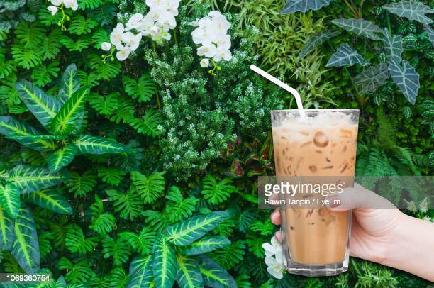 cropped hand of woman holding iced coffee against plants - iced coffee stock pictures, royalty-free photos & images