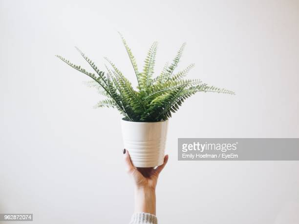cropped hand of woman holding potted plant against white background - potted plant stock pictures, royalty-free photos & images