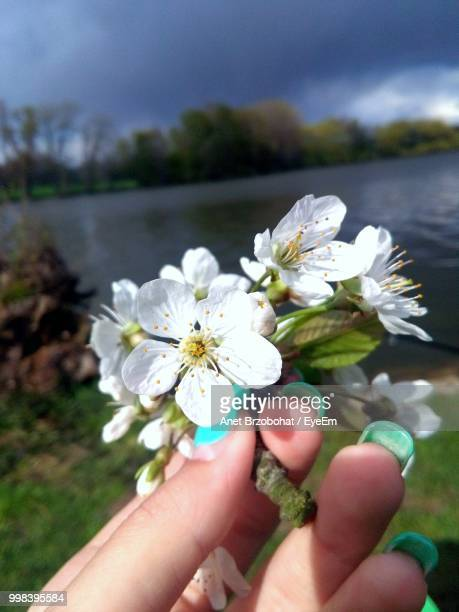 Cropped Hand Of Woman Holding White Flowers At Lakeshore