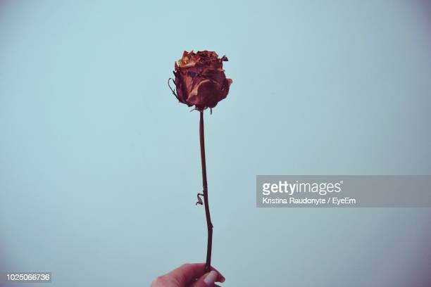 cropped hand of woman holding wilted flower against clear sky - dead woman stock pictures, royalty-free photos & images