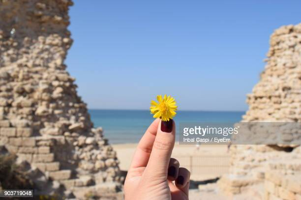 Cropped Hand Of Woman Holding Yellow Flower At Beach