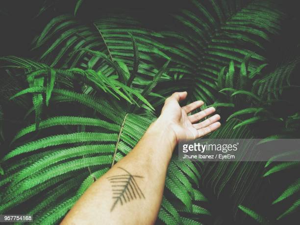 Cropped Hand Of Woman On Plants