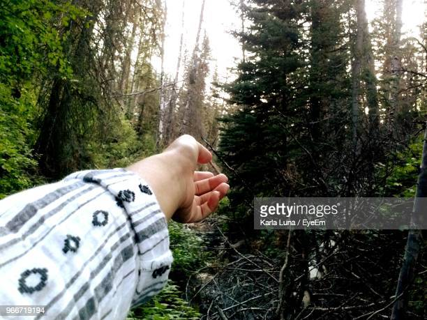 cropped hand of woman reaching trees in forest - provo foto e immagini stock
