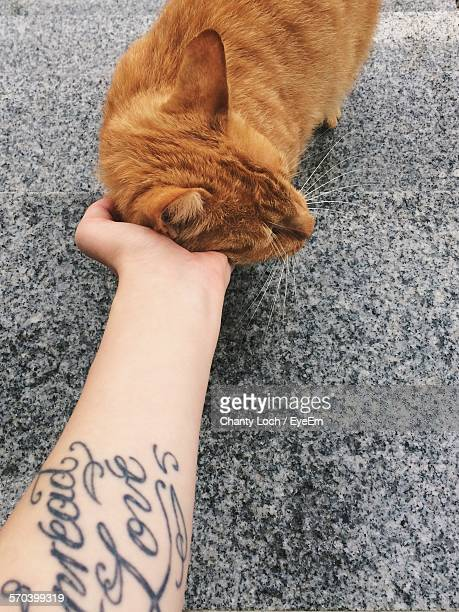 Cropped Hand Of Woman Stroking Ginger Cat