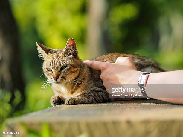 Cropped Hand Of Woman Stroking Tabby