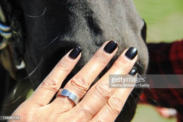 cropped hand of woman touching horse - 黒のネイル ストックフォトと画像
