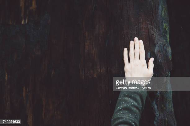 cropped hand of woman touching tree trunk at sequoia national park - bortes foto e immagini stock