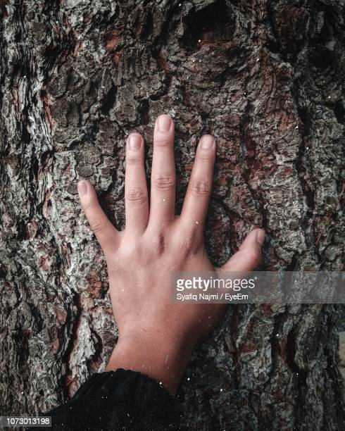 cropped hand of woman touching tree trunk - touching stock pictures, royalty-free photos & images