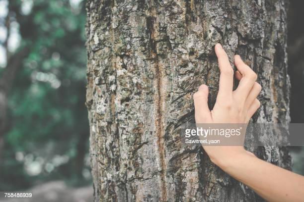 cropped hand of woman touching tree trunk - tronc d'arbre photos et images de collection