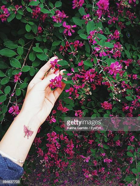 Cropped Hand Of Woman With Butterfly Tattoo Holding Pink Flowers