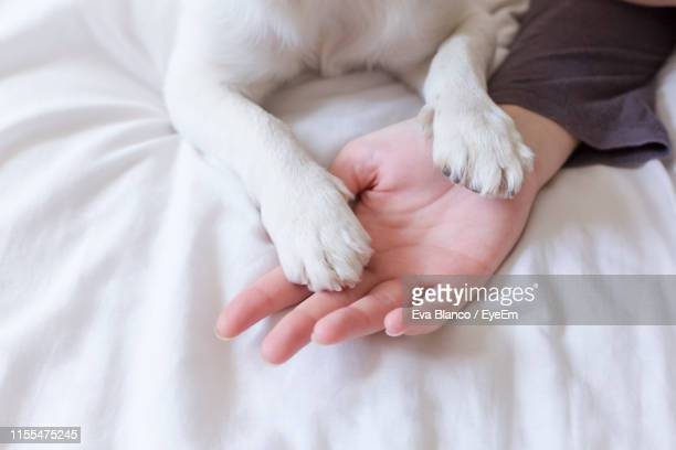 cropped hand of woman with dog on bed at home - 動物の足 ストックフォトと画像