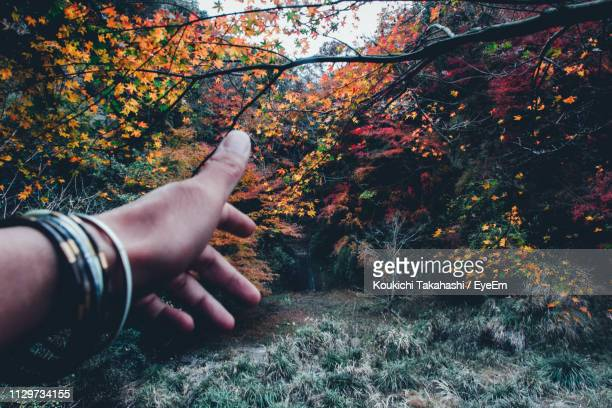 Cropped Hand Reaching Trees In Forest